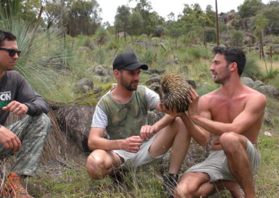 andrew-ucles-wild-tours-echidna