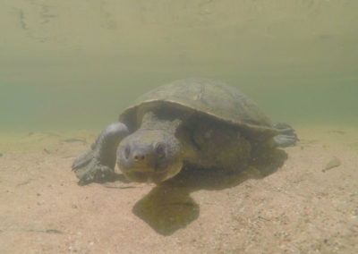 andrew-ucles-wild-tours-turtle