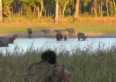 andrew-ucles-wild-tours-water-buffalos