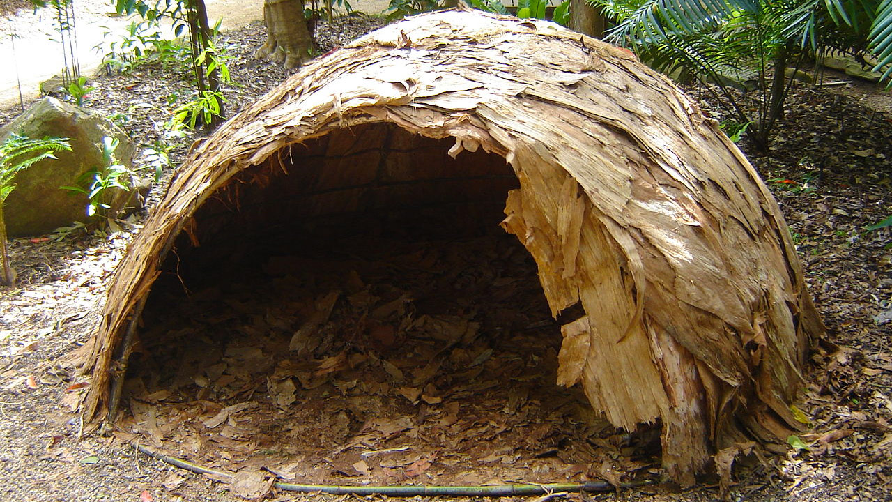 Paperbark is a useful material which can be used as a resource in a survival situation.